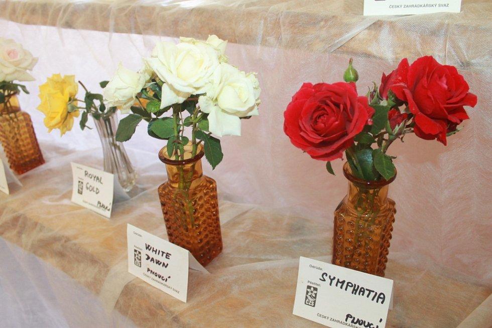 Z expozice růží.
