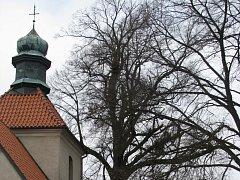 Lípa stojící přímo před vchodem na hřbitov bude co nejdříve skácena. Bezprostřední ohrožení kostela ze 13. století tak alespoň částečně pomine. Vlevo od vstupu je však ještě další strom, který zatím podle odborníků zůstane stát.
