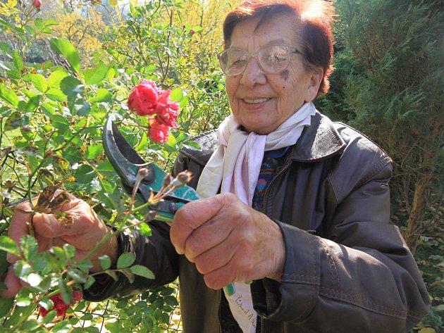 Léčivé rostliny. Řada rostlin skrývá léčivou sílu. I to je poznatek tradiční čínské medicíny, která ?v sobě po generace nese i jistý kulturní odkaz těchto asijských oblastí.