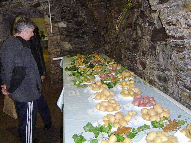 Letos se v jednom víkendu sešly hned dvě bramborářské výstavy. Bramborářské dny v Havlíčkově Brodě a bramborářská přehlídka v Přibyslavi.