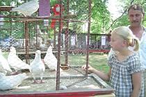Přehlídka úspěchů chovatelů patří už léta k přibyslavské pouti.