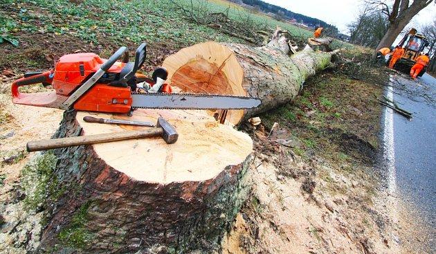 Cestáři kácejí staré a nemocné stromy.