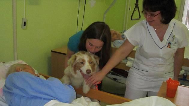 Pravidelný kontakt se psem zlepšuje náladu pacientů, dospělých i dětí.