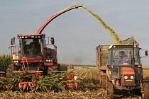 Zemědělci sklidili vloni o třetinu méně brambor a krmné kukuřice než o rok dříve. Ilustrační foto.