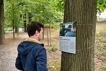 Výstava na stromech 2020.