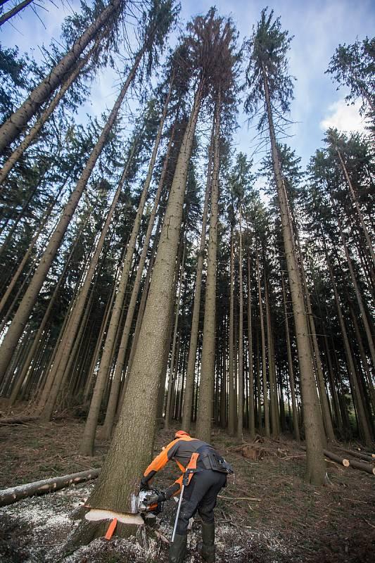 Kácení stromů na Vysočině. Ilustrační foto