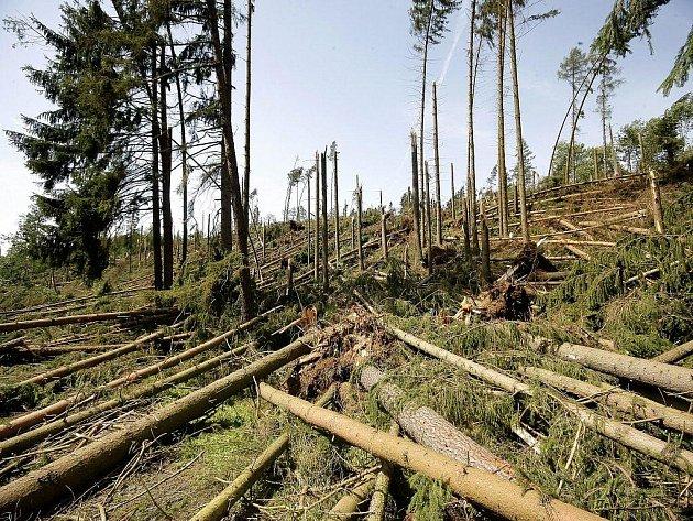 Až 2000 krychlových metrů lesa na Přibyslavsku padlo během několika minut pod nápory vichřice. Údajně mělo jít dokonce o tornádo. Město Přibyslav, kterému lesy patřily, se snaží polámané kmeny co nejdřív prodat.