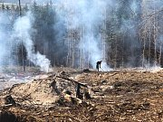 Lesy na Vysočině postupně mizí.