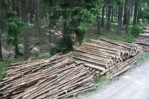Ilustrační foto. Kůrovcového dřeva přibývá, zájem o něj není, lesníci prodávají pod cenou.