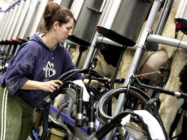 Zemědělské družstvo Kámen patří mezi významné distributory mléka na Vysočině. V současné době chová necelou tisícovku dojnic. Mléko prodává mlékárnám v Hlinsku, Jihlavě, nebo přibyslavské Pribině.