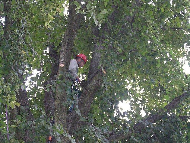 Zajímavá, ale ne pro každého. Taková je práce arboristů, kteří provádějí ruční ošetření dřevin. Zvládnutí takové profese předpokládá určitou horolezeckou průpravu.