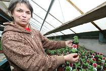 Marta Peřinová v roce 1990 opustila práci brusičky skla, aby vrátila život do sto let starých skleníků, které v Přibyslavi postavil její dědeček Antonín Gritsch.