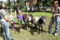 Koňská benefice v Havlíčkově Brodě.