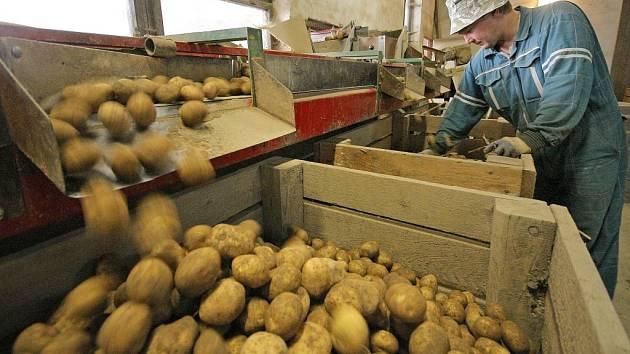Na sadbu nově vyšlechtěné odrůdy českých brambor si budou muset pěstitelé ještě nějaký čas počkat. V každém případě se jim to ale vyplatí. Monika se díky svým vlastnostem řadí mezi špičkové odrůdy brambor v Evropě.