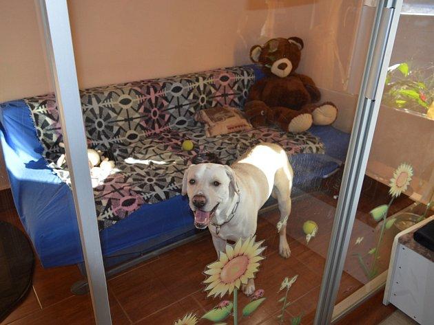 V nabídce břevnického hotelu pro psy si majitelé svých čtyřnohých kamarádů mohou vybrat z venkovních, vnitřních a VIP kotců.