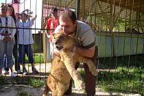 Na fotce je se lvem Tangem principál cirkusu František Navrátil.