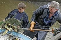 Dvaadvacet metráků lína obecného naložili rybáři v havlíčkobrodských sádkách.  Ryby si odvezli rybáři z Křižanova, vysadí je do sportovních vod.