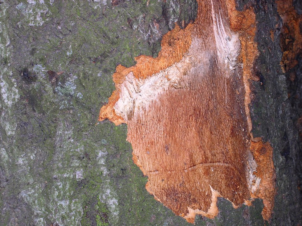 Následky po výbuchu granátu