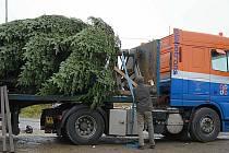 Také letos si Holanďané přijedou do Brodu pro vánoční strom.