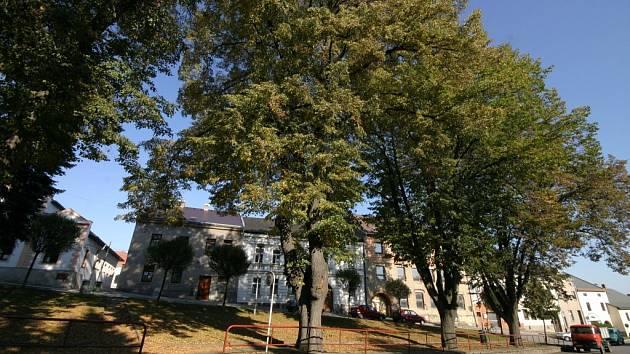 Romantický pohled na zelené stromořadí ztrácí kouzlo pro obyvatele okolních domů, kteří musejí i v létě doma topit.