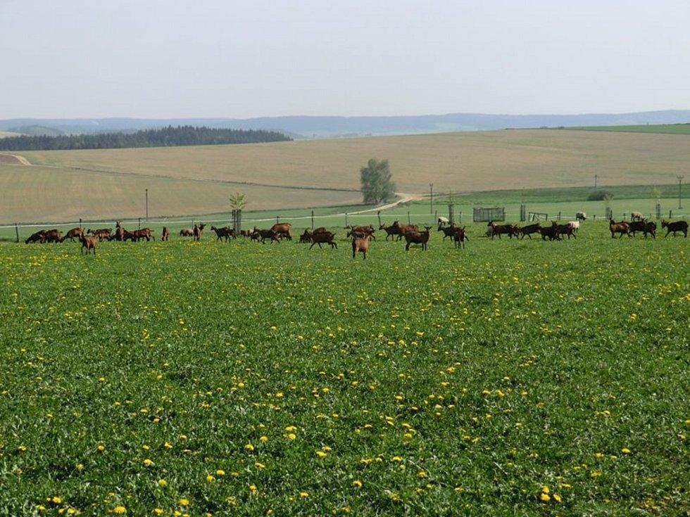 KUS CESTY. Věra Dvorská z Olešenky prošla dlouhou a úspěšnou cestou od slečny z paneláku k majitelce ekologické farmy.