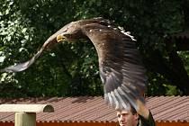 Ukázka výcviku dravců a sov v jihlavské zoo. Ilustrační foto. Deník/archiv
