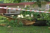 Čtvrteční noční vichřice napáchala škody také v havlíčkobrodském parku Budoucnost. Silné větve urostlých lip lámala jako sirky.