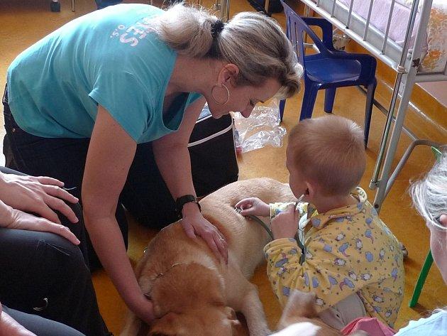Labradorka Sára na dětském oddělení havlíčkobrodské nemocnice.