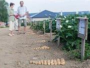 Polní den o bramborách v Olešné.