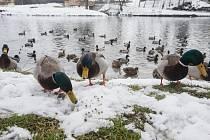 Dokrmování ptáků v zimním období.