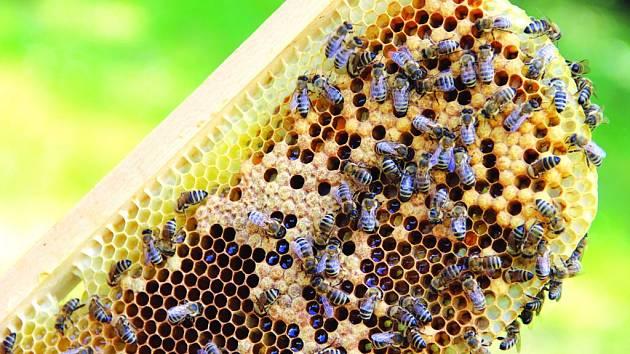 Produkce lesního medu je letos špatná. Kilogram medu se dá u chovatelů nakoupit za 110 až 120 korun.