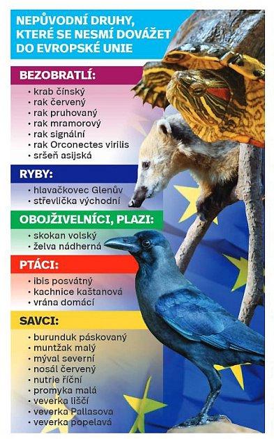 Nepůvodni druhy, které se nesmi dovážet do Evropské unie. Infografika.