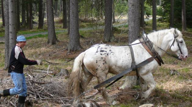 Kůň v akci.