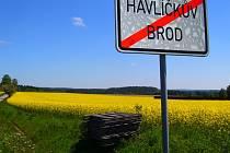 Žlutá pole.