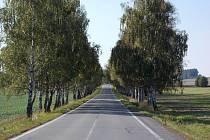 Alej má stáří asi 50 let, sázela se při stavbě nové silnice.