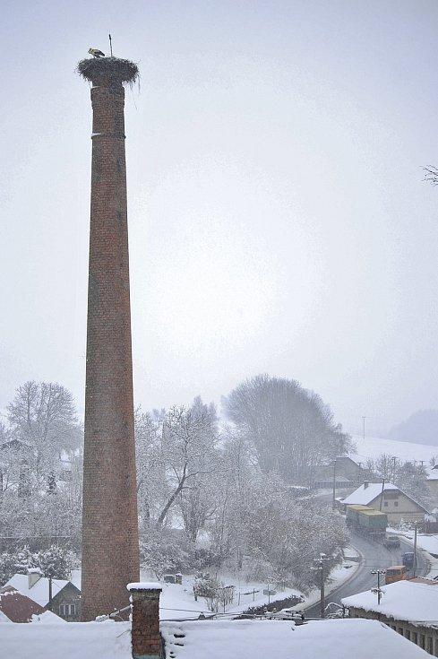 Čápi na komíně ve Věži-Skále v dubnu 2021.