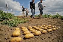 Součástí Polního dne, který pro pěstitele brambor z celé České republiky ve čtvrtek uspořádala Havlíčkova Borová – zemědělská akciová společnost ve spolupráci s Českým bramborářským svazem, byla i prohlídka polních pokusů.