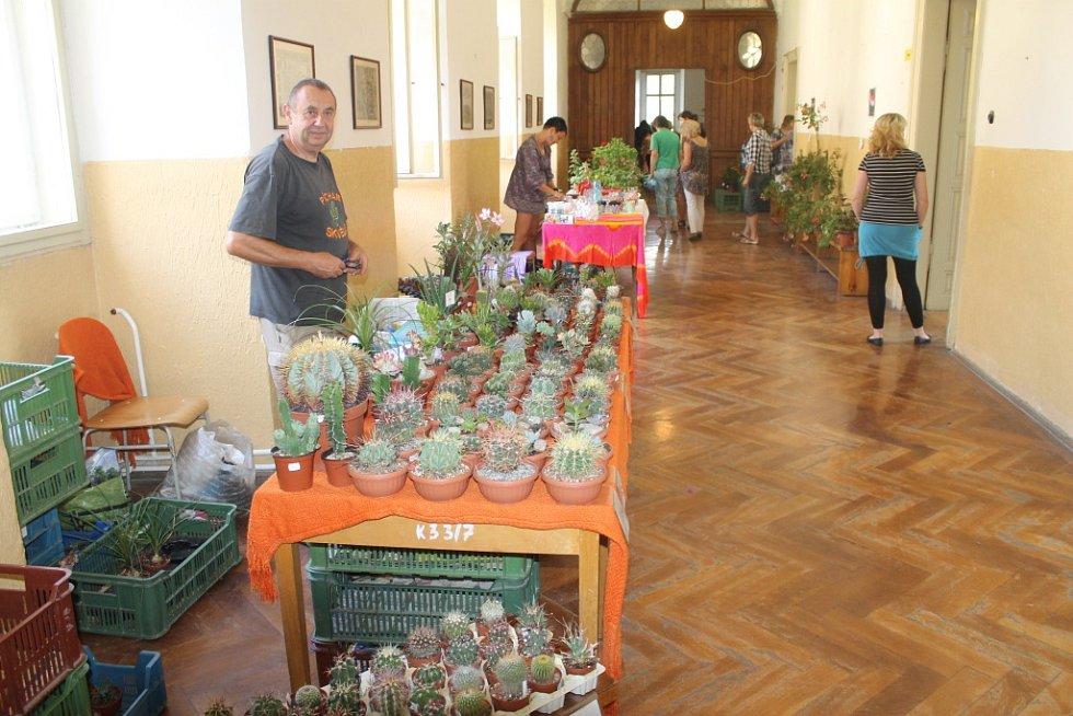 Z expozice kaktusů.