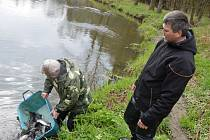 Světelští rybáři vysadili do Sázavy téměř pět set ryb.