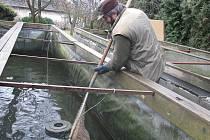 Rybář Jiří Pilař z Lukavice s kolegou již chystá ryby k předvánočnímu prodeji.