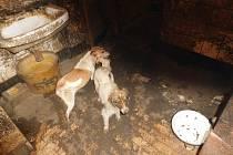 Veterináři odebrali chovateli čtyřicet zanedbaných psů