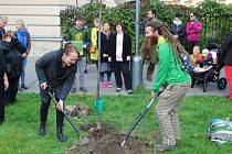 Zasazení Stromu dobrovolnictví v Chrudimi