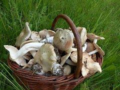 První houbová úroda.
