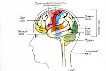 Hamzova odborná léčebna pro děti a dospělé léčí i dospělé pacienty s poškozením mozku.
