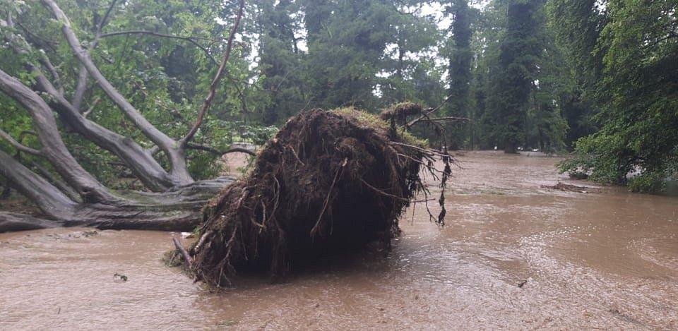 Voda vyvrátila strom v Heřmanově Městci