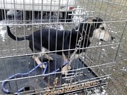 Osud týrané Rosi dojal bezmála tisícovku dárců. Na účet zvířete přibylo za čtyři dny téměř půl milionu korun!