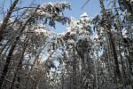 Sněhová kalamita na Chrudimsku.