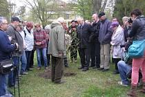 Hamzův park a arboretum bylo obohaceno o nově vysazený modřínový hájek.