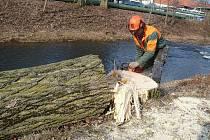 V BLÍZKOSTI CHRUDIMSKÉHO STADIONU AFK teď zaměstnanci odborné firmy provádějí kácení vzrostlých topolů u řeky.
