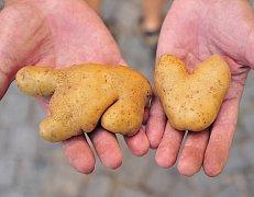 Bramborový medvěd a bramborové srdce ve dlaních pěstitele Jaromíra Doležala.